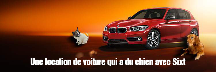 Location de voiture animal de compagnie