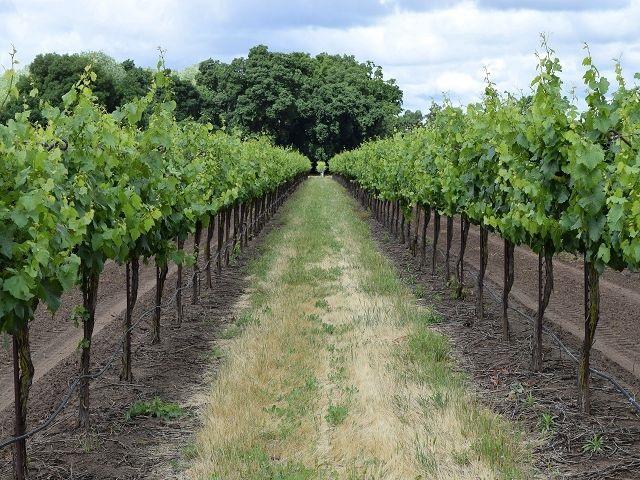 vin-italie-abruzzes