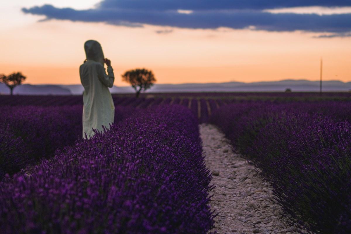 les-plus-beaux-endroits-de-provence-valensole-lavande